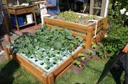 When combined, the ebb and flow basin and deep water culture form the Forsthoefel's hybrid aquaponics system.