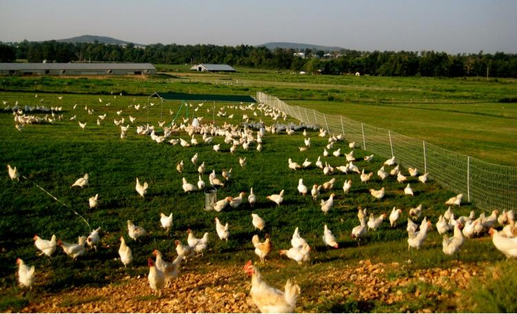 Austin-based Vital Farms sells gourmet eggs in several states and stores. The company was ranked No. 51 on the Inc. 5000 list last year.