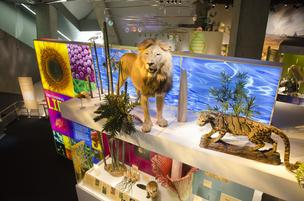 The Discovering Life exhibit greets visitors with vibrant color, taxidermy exhibits and dioramas of Texas regions with their unique wildlife.