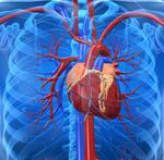 Doctor predicts new biotech center will build a heart by 2015