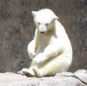 No. 1 -- Denver Zoological Gardens (Denver Zoo). Attendance: 1,809,820.