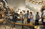 The Denver Museum of Nature and Science's Prehistoric Journey exhibit.