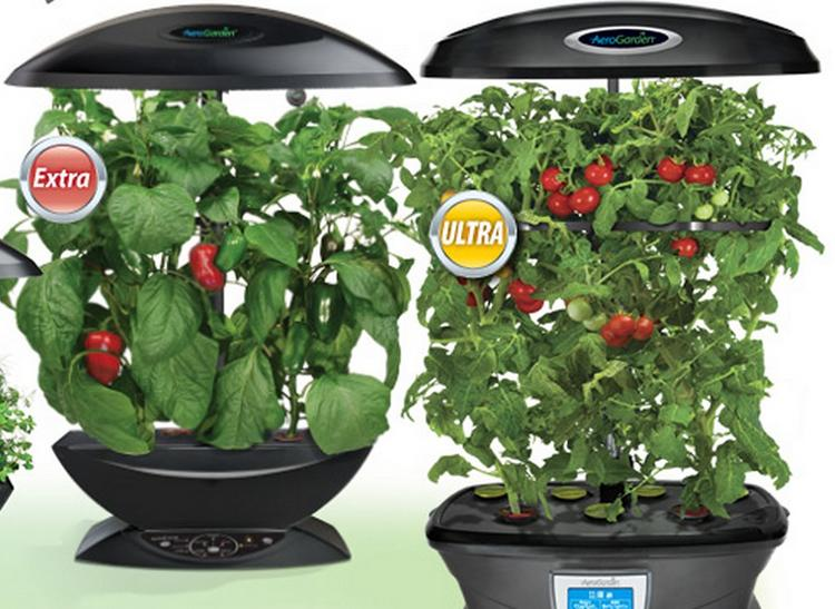 AeroGrow's products allow consumers to grow plants indoors.