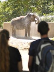 An elephant get hosed off on a hot day at the Denver Zoo. August 2011