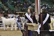 Jennifer Cox, of Coatesville, Indiana, the National Shorthorn Lassie Queen, preps ribbons at the National Western Stock Show.