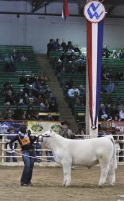"""Kassi Bauman wins reserve champion with her charolais bull, Quiet Riot or """"QR"""" at the National Western Stock Show."""