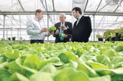 Richard Naha, CEO of Circle Fresh Farms, left, shows investors Larry Atler and Zach Frisch the lettuce being grown hydroponically at GrowHaus.
