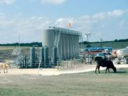 Cows share the land with separator and storage tanks at a fracking site in Kenedy, a small town in South Texas.