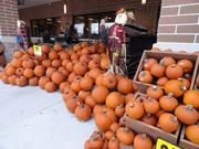 Stacked pumpkins cascade around a scarecrow outside Kroger's newest location at 1440 Studemont.