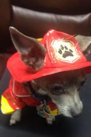 """PCO Div II Inc. in Baytown  Vinny, the company """"fire dog"""""""