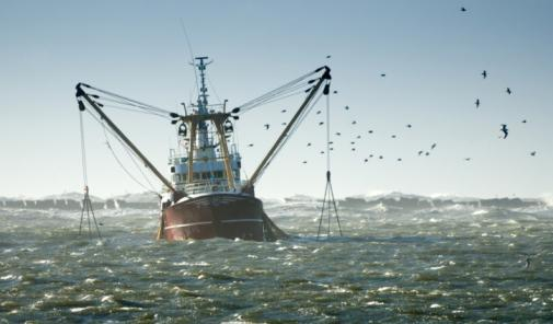 The Gulf of Mexico 'dead zone' can affect the output of the billion-dollar fishing industry each summer.