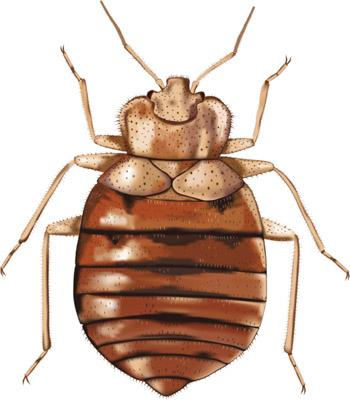 Dayton ranks No. 11 for its bed bugs, up four places from last year.