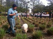 Protester Al Neil poses with his pet pig (Ms. May, who was not happy to be there, he said) at Discovery Green.