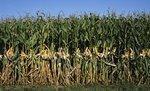 Lockport corn maze to promote farming