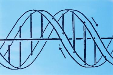 Partners HealthCare is staking out a leadership position in genetics with gene-sequencing software and a new medical genetics service it plans to launch in January.