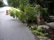 A tree fell on the bridge on Herschel Avenue near Boone Park in Riverside.