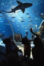 Concord Sea Life aquarium to open next spring