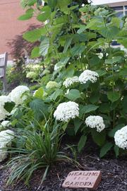 Hydrangeas, lilies, roses and other treasures bring peace to patients and their families at a peace garden at Saint Luke's.
