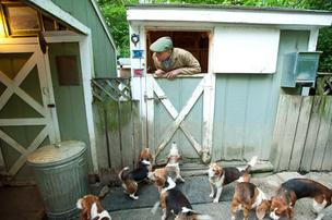 Click here to learn more about Buck Wiseman and his beagles.