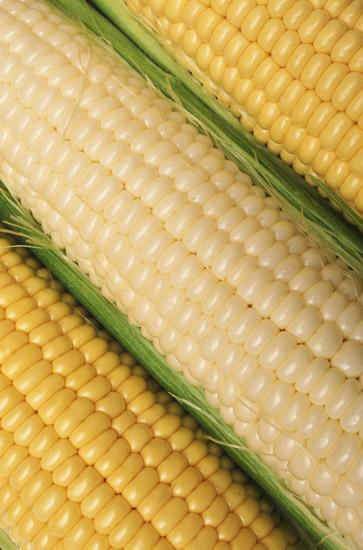 Ohio's corn crops could be in danger as dry conditions persist around the state.