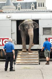 One of the elephants disembarked the Ringling Bros. and Barnum & Bailey Circus train on Wednesday.