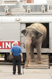 The elephant continued to climb off the train.