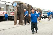 A member of the circus crew helped with crowd control Wednesday as elephants were taken for a walk to KFC Yum! Center.