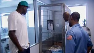 Last year in Memphis, Zach Randolph helped rescue a pit bull that was stuck in a drain pipe. The story will be the focus of an episode of 'Pit Bulls and Parolees' on Animal Planet.
