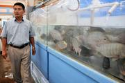 James Lee walks near live fish tank at Bi-Lo International's Winchester Farmers Market, which operates in a former Shnucks grocery store.