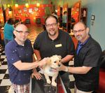 pets, salons collide in hair wars campaign