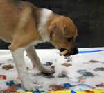 Paws for Art turns pets into artists