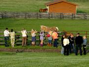 Many of the guests walked throughout the ranch to see the horses and cattle.