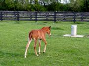 A foal plays in one of the horse pens while guests watch.