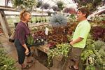 New life, old business: Owner grafts organic shift to new offerings to grow greenhouse