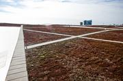 A look at Music City Center's green roof.