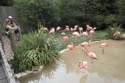The Price family from Nashville visits the flamingo exhibit.