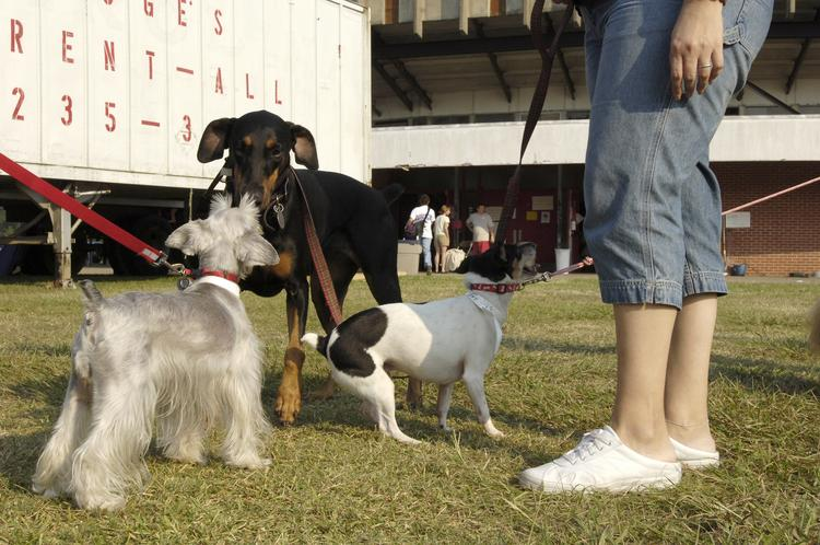 Pet care is just part of Zoetis's business; it will also make products for farm animals.