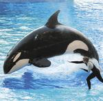 SeaWorld said to be close to filing for an IPO