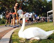 A Lake Eola resident watches as more than 14,000 participants gather for the OIA Corporate 5K.