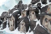 This penguin rock wall educates guests on each penguin and where they live on Antarctica.