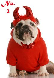 Devil is the No. 2 most popular pet Halloween costume this year, according to NRF.