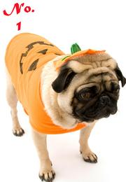 Pumpkin is the No. 1 most popular pet Halloween costume this year, according to NRF.