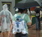 Star Wars fans celebrate at Disney, weather or not