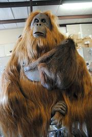 An amazingly realistic orangutan mother and baby sit on a workstation at Florida Creative Industries.