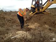 A backhoe starts the process of digging in around the burrow, allowing the environmental scientist to get in closer with a shovel so he can catch the gopher tortoise.