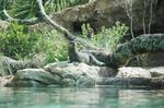 Central Florida Zoo to open new otter exhibit
