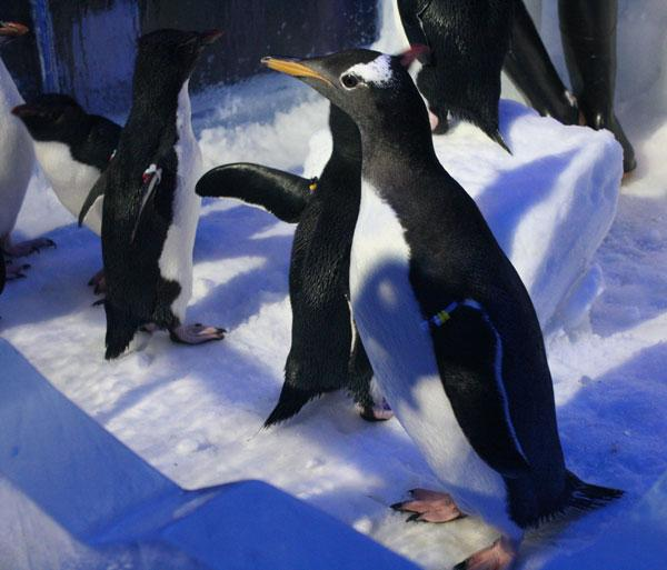 SeaWorld Orlando launched a new website Tuesday dedicated to its upcoming attraction Antarctica: Empire of the Penguin.