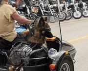 A dog gets a comfortable ride in a motorcycle side-car.