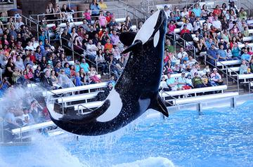 SeaWorld shrinks Q1 loss