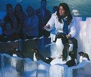 SeaWorld animal ambassador Julie Scardina discusses the new penguin exhibit.
